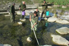 gestione acque